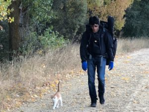 スペインのネコは道案内